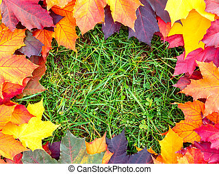 Frame of colorful maple leaves on the green grass. Autumn background