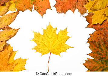 frame of fallen autumn leaves
