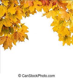 Frame of fallen maple leaves on white background.