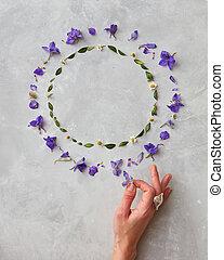 frame of flowers - Frame of spring violet flowers on a gray ...