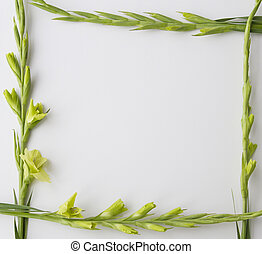 Frame of flowers Gladiolus on white background. Flat lay, top view