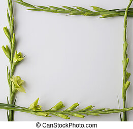 Frame of flowers on white background. Flat lay, top view