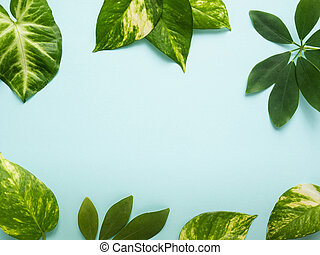 Frame of fresh green leaves on a blue background. Copy space