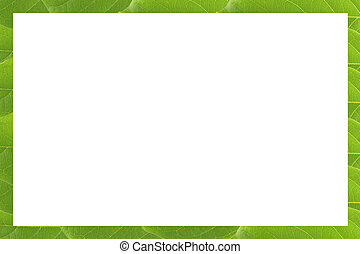 Frame of Green leaf pattern isolate