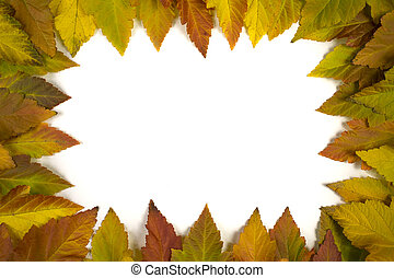 frame of leaves on a white background