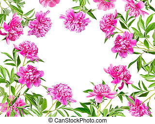 Frame of many pink peonies