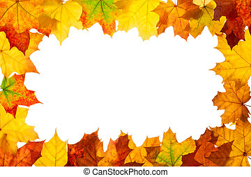 Frame of maple autumn leaves