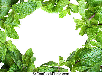 Frame of mint isolated on white background