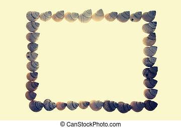 Frame of Moon Snail Shells