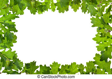 Frame of oak leaves in backlight. Isolated on white.