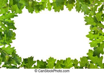 Frame of oak leaves in backlight. Isolated on white.