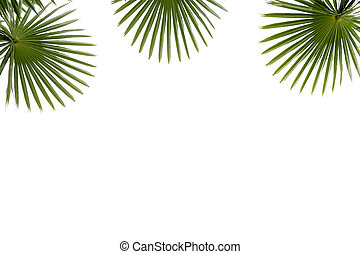 Frame of palm green leaf isolated on white background.