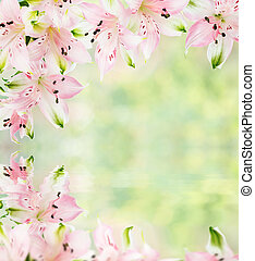 Frame of pink alstroemeria flowers with reflection in a water