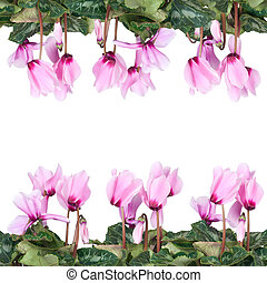 frame of pink flowers