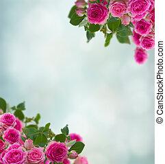 frame of pink roses brunches