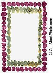Frame of Pink Umbonium Seashells and Moon Snail Shells
