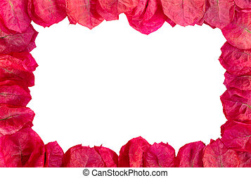 Frame of purple flower blossoms on white background