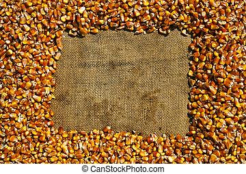 maize - frame of ripe maize grains