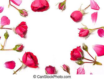 Frame of roses, red roses. Flower pattern