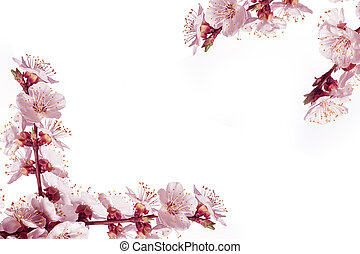 Frame of spring flowers on a white background