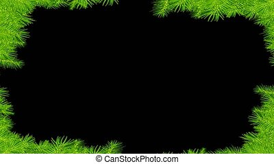 Frame of spruce branches on black background