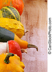 Frame of Squash - Frame of Various Miniature Pumpkin, Squash...