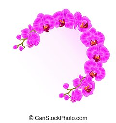 Frame  orchid Phalaenopsis purple  flowers tropical plants green stem and buds vintage vector.eps