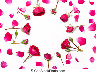 Pattern of red roses petals on white background