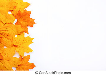 frame with autumn orange maple leaves on a white background