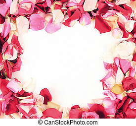 frame with beautiful roses petals on a white background