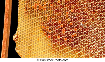 Frame with bee honeycombs filled with honey, and bees on it...