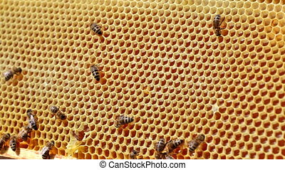 Frame with bee honeycombs filled with honey