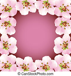 Frame with blossoming sakura - japanese cherry tree