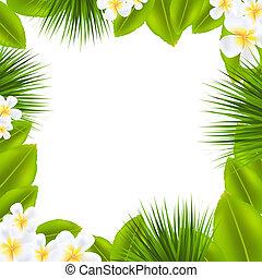 Frame With Frangipani And Leaf