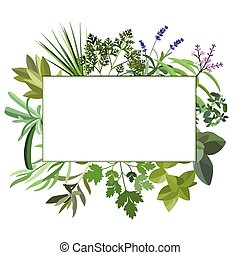 Frame with fresh herbs and spices. Banner with leaf and grass. Floral flat design elements. Vector illustration.