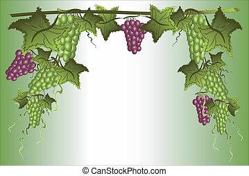 Frame with grape.