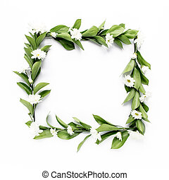 frame with green leaves and branches of chamomiles, chrysanthemum isolated on white background. lay flat, top view