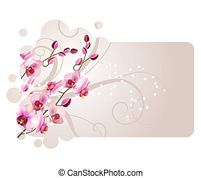 Frame with orchid pink flower