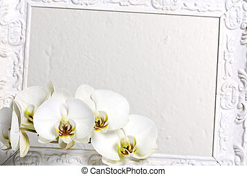 frame, witte , orchids