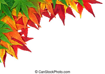Framed by autumn Japanese Maple leaves, gradation over a white background