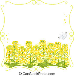 Framed Canola flowers - Stem frame with canola flowers and a...