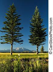 Framed Mount Sopris - Two vertical pines framed snow capped...