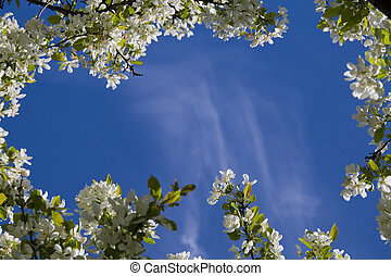 Clear blue sky and framed in apple blossoms