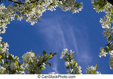 Framed sky - Clear blue sky and framed in apple blossoms