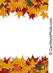 Framework from maple leaves of various colors