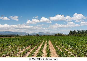 francês, agricultura, paisagem