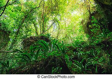 france, sauvage, forêt, rocheux