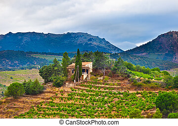 France, view of vineyards