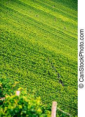 Franconian Wineyard
