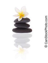 frangipani, auf, steine